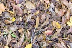 Мертвые листья Стоковые Изображения