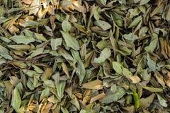 Мертвые листья стоковое изображение rf