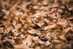 Мертвые листья Стоковые Фотографии RF