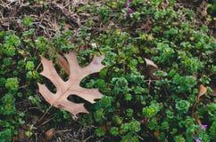 Мертвые лист в траве Стоковые Изображения