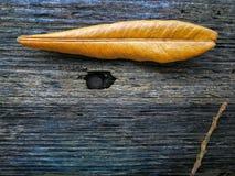 мертвые лист на таблице Стоковые Фотографии RF
