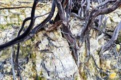 Мертвые леса в горах стоковое изображение rf