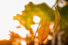 Мертвые листья на стержне против яркой расплывчатой предпосылки стоковое изображение