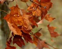Мертвые листья Стоковое фото RF
