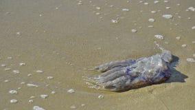 Мертвые медузы сток-видео