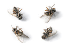 мертвые мухы Стоковое Изображение