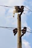 мертвые проводы аиста электричества Стоковые Изображения RF