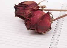 мертвые розы Стоковое Фото