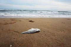 Мертвые рыбы на пляже Таиланда Стоковое Изображение