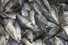 Мертвые рыбы на рынке Стоковая Фотография RF