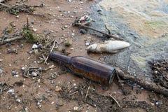 Мертвые рыбы среди пакостного отброса Стоковое Изображение RF