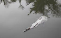 Мертвые рыбы уплытые в воду Стоковые Изображения