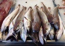 Мертвые рыбы Стоковое Изображение RF