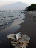мертвые рыбы Стоковые Фотографии RF