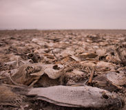 Мертвые рыбы Стоковое Фото
