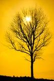 Мертвые силуэты дерева Стоковое фото RF