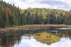 Мертвые стволы дерева в озере Bouchard Стоковое Изображение RF