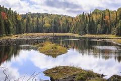 Мертвые стволы дерева в озере Bouchard Стоковые Изображения RF