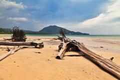 Мертвые стволы дерева на пляже Стоковое Фото