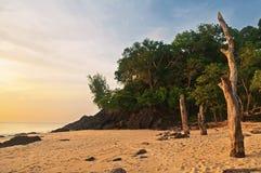 Мертвые стволы дерева на тропическом пляже Стоковая Фотография