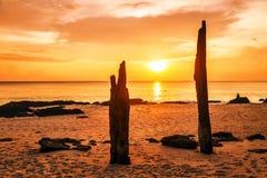 Мертвые стволы дерева на тропическом пляже Стоковая Фотография RF