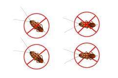 Мертвые тараканы Стоковые Изображения