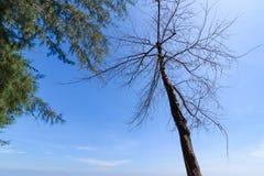 мертвый вал берега Таиланд Стоковые Изображения RF