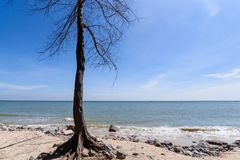 мертвый вал берега Таиланд Стоковое Фото