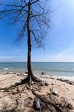 мертвый вал берега Таиланд Стоковое Изображение RF