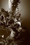 мертвый вал корня Стоковая Фотография
