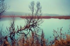мертвый вал озера Стоковое Фото