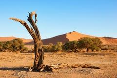 мертвый вал пустыни Стоковое Изображение
