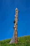 мертвый вал холма Стоковое Фото