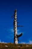 мертвый вал Стоковая Фотография RF