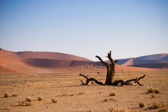 мертвый вал namibian пустыни Стоковое фото RF