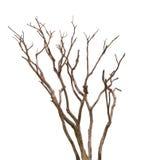 Мертвый вал изолированный на белой предпосылке Стоковая Фотография