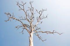 мертвый вал неба Стоковое Фото