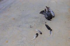 мертвый вихрун Стоковое фото RF