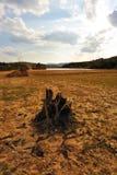 мертвый высушенный вал корня поля Стоковое Изображение RF