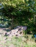 Мертвый деревянный пень прерванный вниз с дерева снаружи стоковые фотографии rf