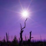 Мертвый лес после вулканического извержения Стоковое Изображение