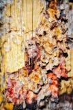 Мертвый конспект коры дерева в долине памятника Стоковые Изображения RF