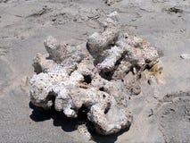 Мертвый коралл на пляже Стоковая Фотография