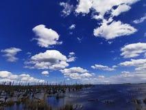 Мертвый лес в озере с голубым небом и ckouds стоковая фотография rf
