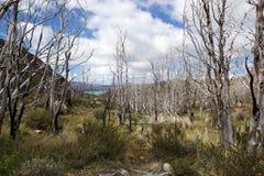 Мертвый лес деревьев в национальном парке Torres del Paine, зоне Magallanes, южной Чили стоковое фото