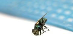мертвый макрос мухы Стоковое Фото
