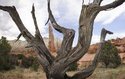 Мертвый можжевельник в парке штата Kodachrome Стоковое Фото
