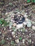 Мертвый огонь стоковое изображение