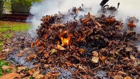 Мертвый ожог листьев в пламенах акции видеоматериалы