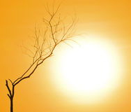 Мертвый силуэт дерева Стоковое Изображение